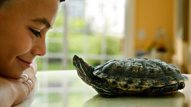 how-long-do-pet-turtles-live_584994f0-a415-444d-afe4-5eda539bbb94