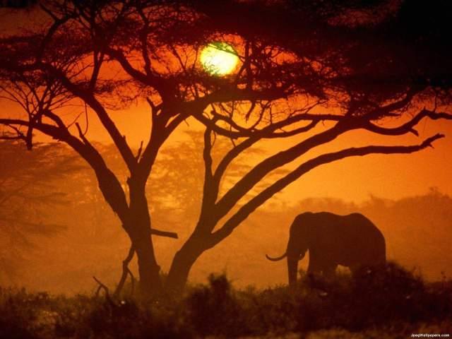elephant-kenya-340364