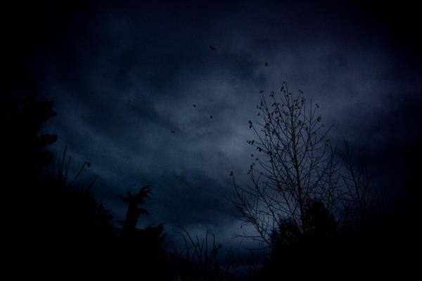 darkness_by_4nki_d15jl4s-fullview