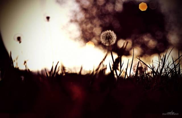 autumn_by_nakrocp_d338zao-pre